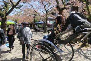 新庄村「がいせん桜」1